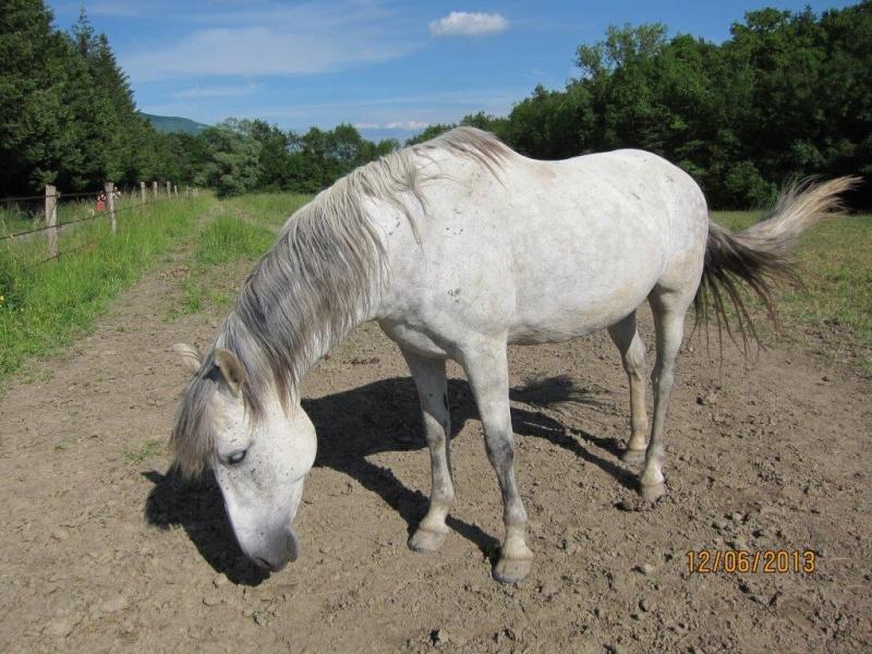 POMMELEE D'AMOUR - ONC Selle née en 1992 - Adoptée en juillet 2011 par Shamane - Page 4 Pommel11