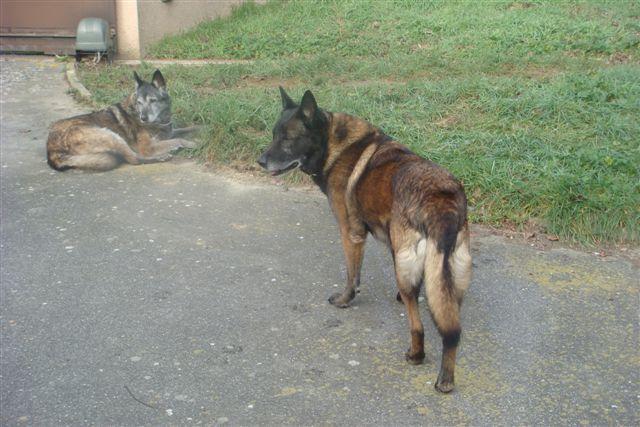 2 malous menaces euthanasie suite au deces de leur maitre URGENT EUTHANASIE SAMEDI 12/02/2011 Urg11110