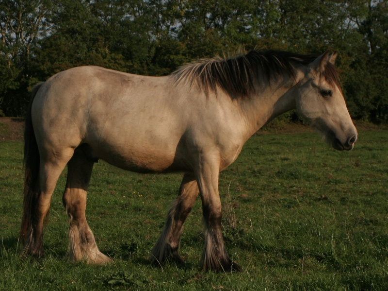 Des IC isabelle et palomino a Cairnview Dusty211