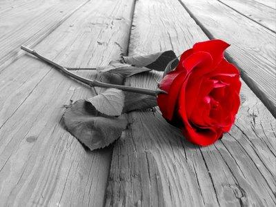 St Valentin de Michael ! Rose10