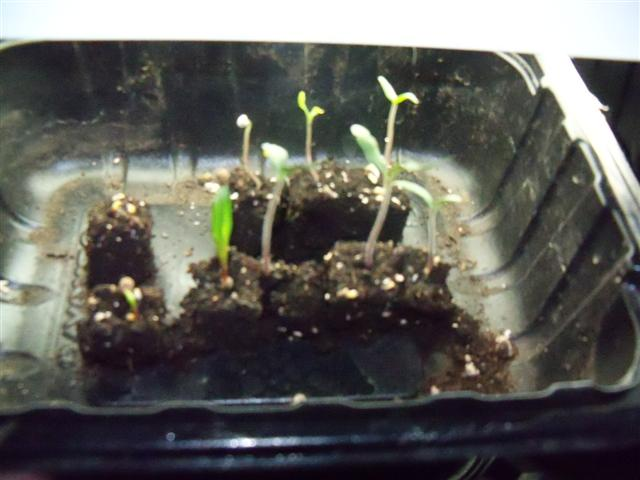 New Soil Block Maker 02-26-10