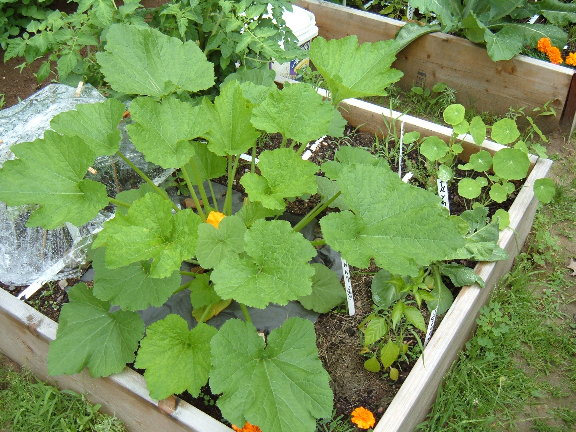 winter and summer squash 07-03-14
