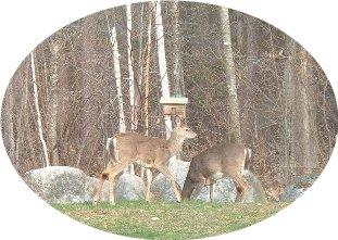 Newbie researching like crazy! Deer_410