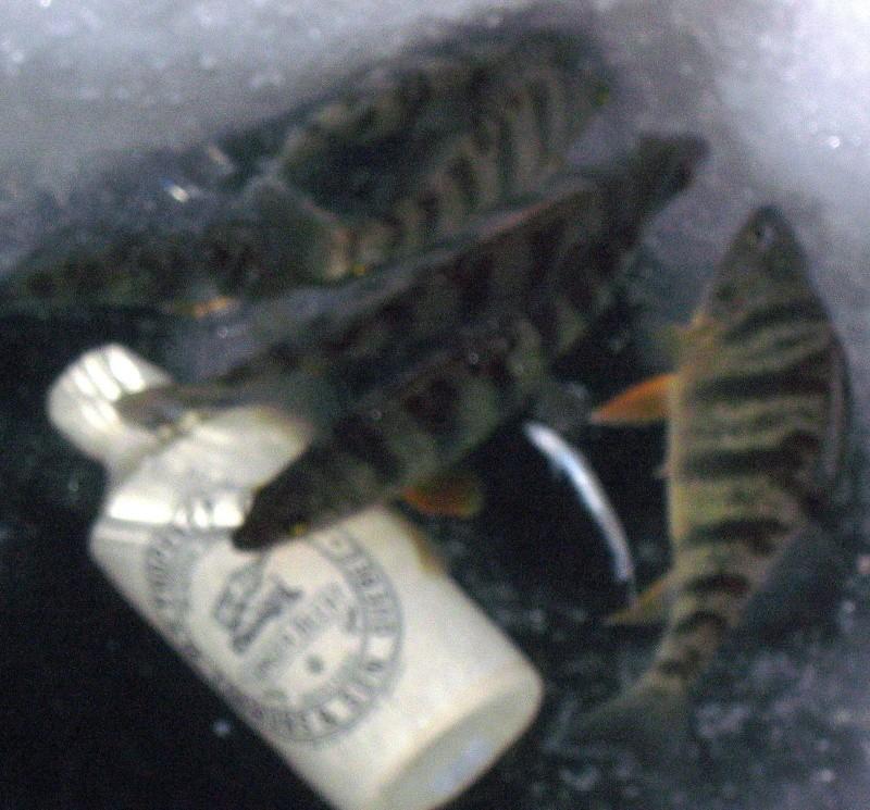 des poisson a la peche a la bouteille  Img_8011