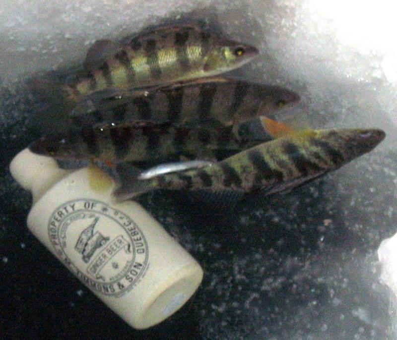 des poisson a la peche a la bouteille  Img_8012