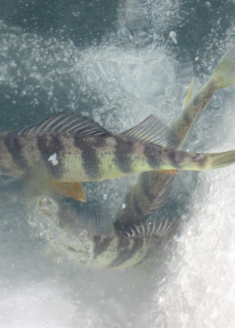 des poisson a la peche a la bouteille  Img_8013