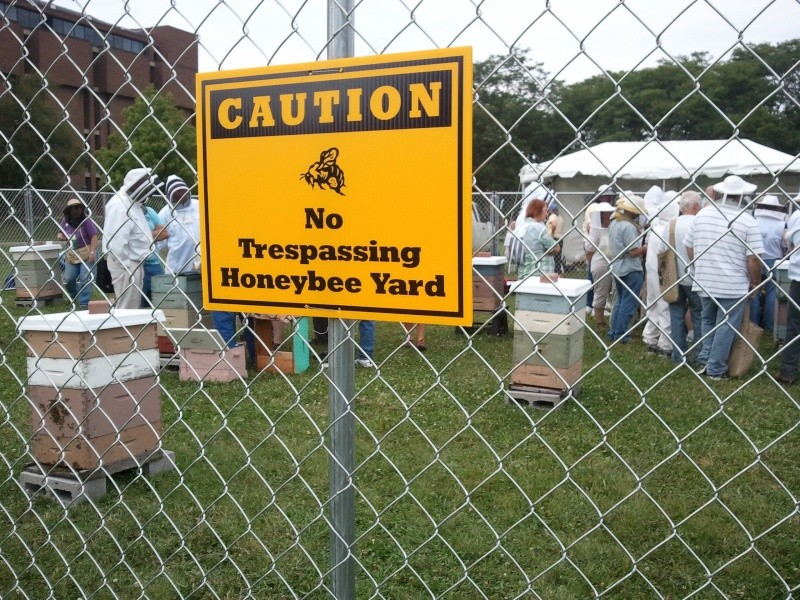 Keeping bees 13810