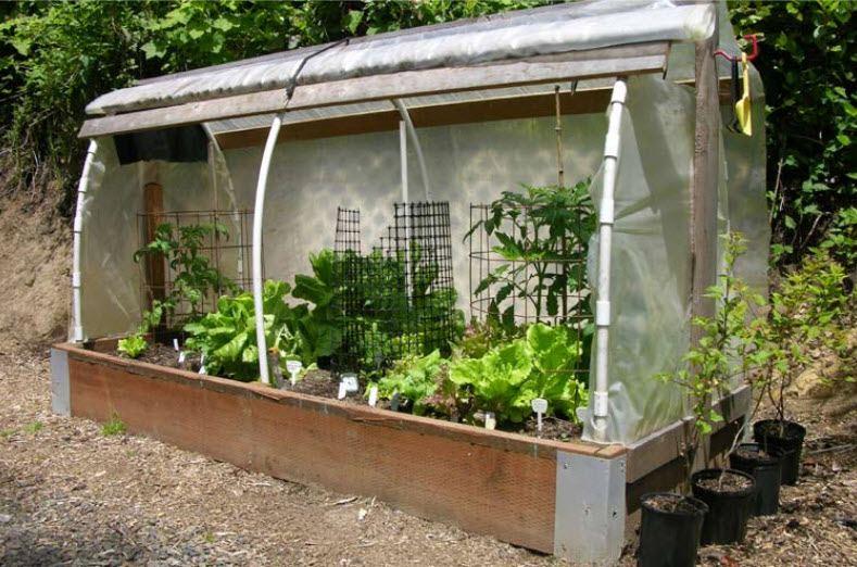 Greenhouse dreams - Page 2 Cloche10