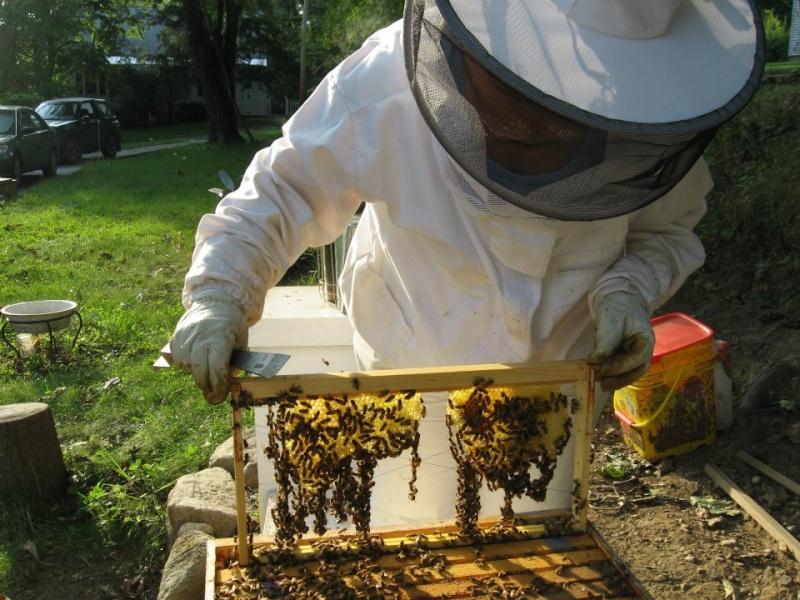 Keeping bees Festoo10