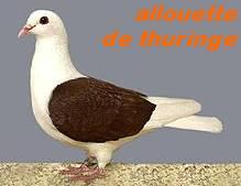 Les Pigeons d'ornement (fantaisie) Allou210