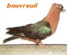 Les Pigeons d'ornement (fantaisie) Bouv210