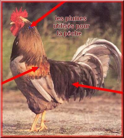 la poule Limousinse (coq de pêche) Fin10