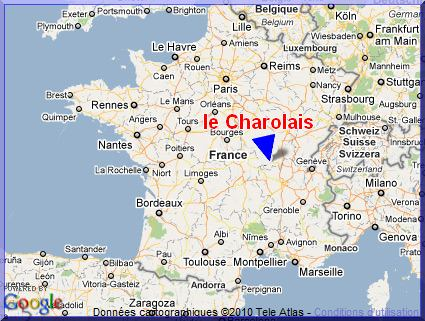 la poule Charollaise Origin11