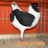 Les Pigeons d'ornement (fantaisie) Type_p10