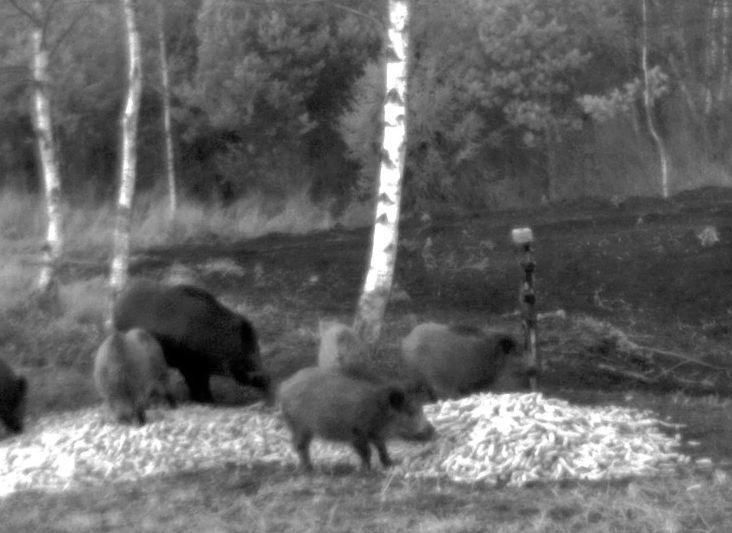 Wildtier-Livecams - Seite 3 Schwei10