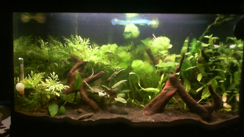 L'aquarium de Lahel 2013-010