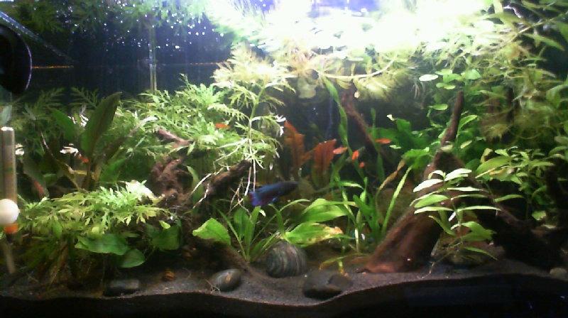 L'aquarium de Lahel 2013-013