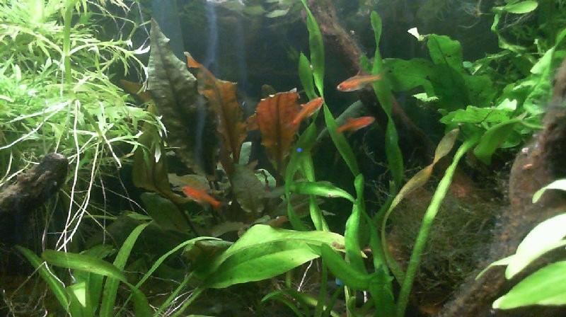 L'aquarium de Lahel 2013-015