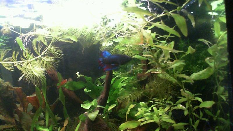 L'aquarium de Lahel 2013-016