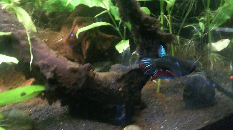 L'aquarium de Lahel 2013-018