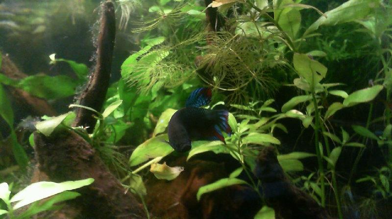 L'aquarium de Lahel 2013-019