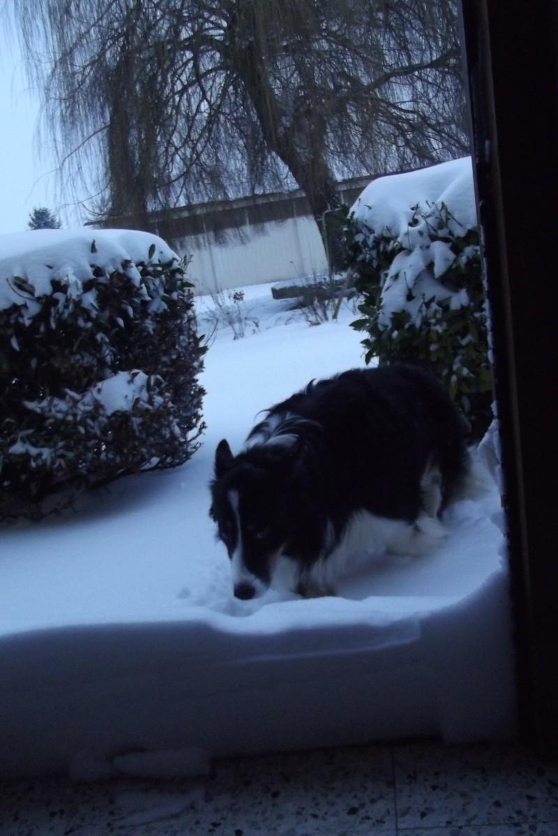 la neige est-elle arrivée chez vous ?  - Page 19 Neiges10