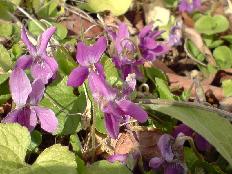 Les violettes - Page 2 P1202121