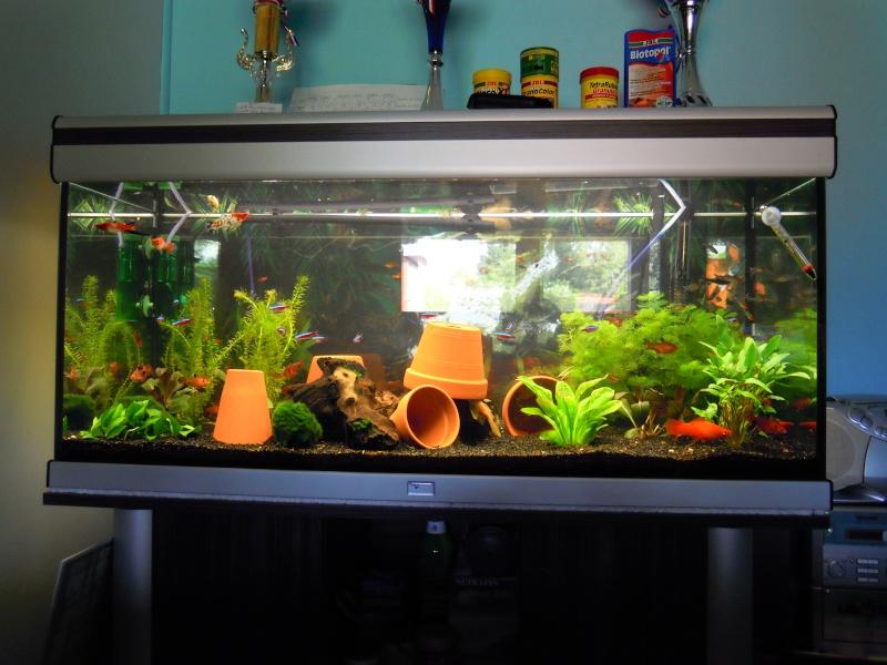 L'aquarium d'eleveur62 Dscn0210
