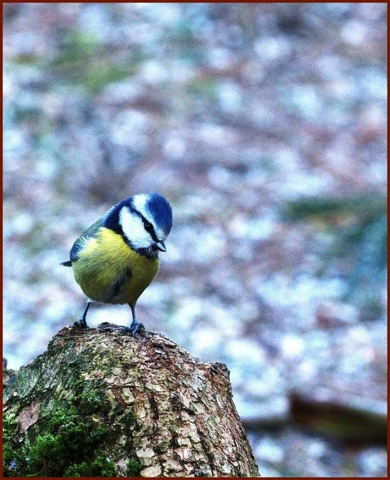 Essais oiseaux.... Anniv_10