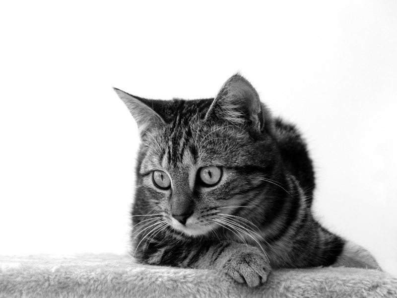 Photographies animales - Page 3 Pucie_11