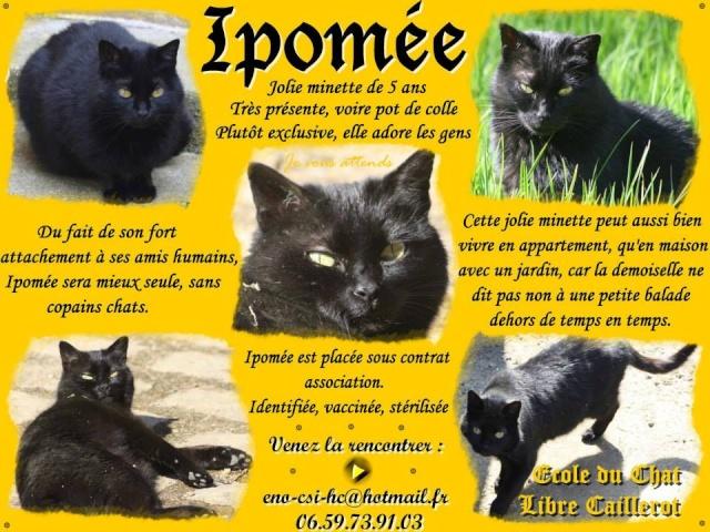 IPOMEE - Européenne noire - 07/2009 Ipomee10