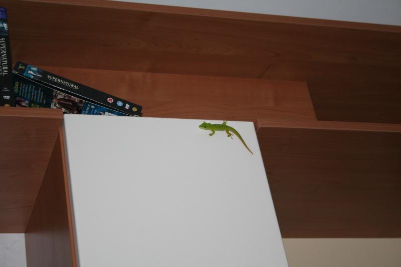 Gecko abgehauen Img_5410