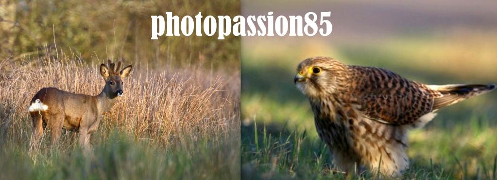 photopassion85