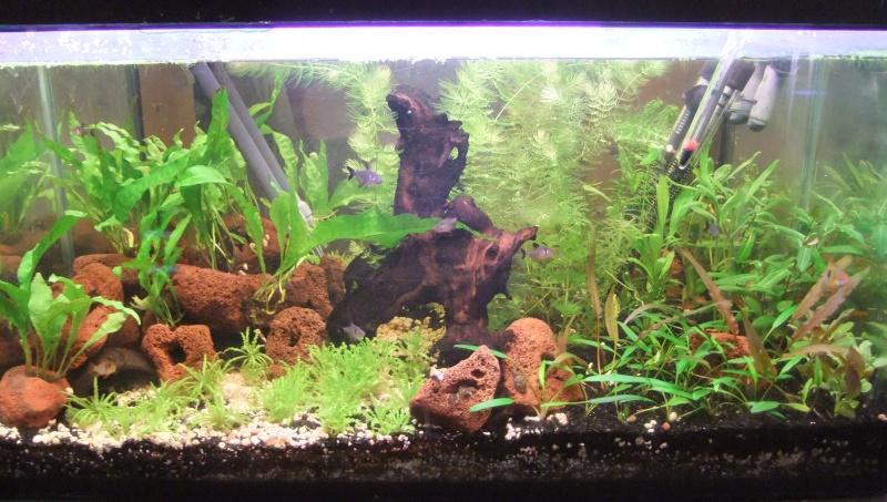 Mes aquariums : Dscf1114