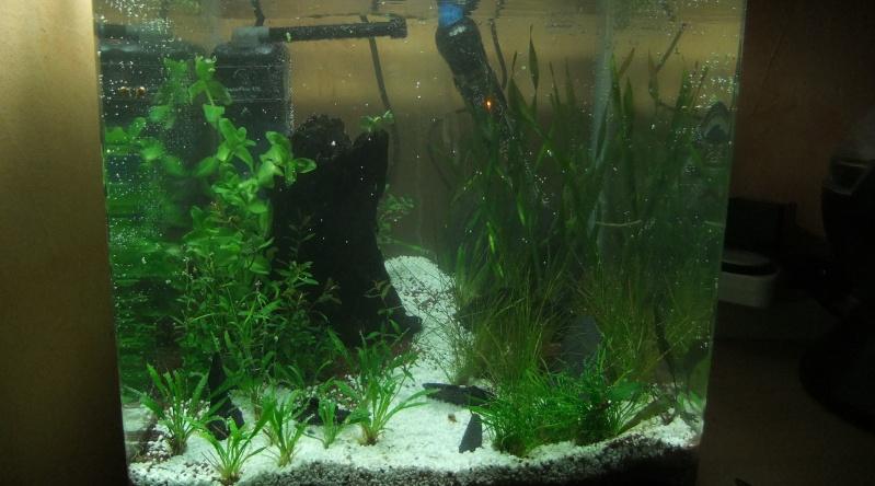 Mes aquariums : Dscf1115