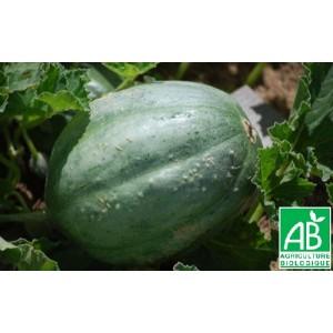 melon - Page 4 Melon-10