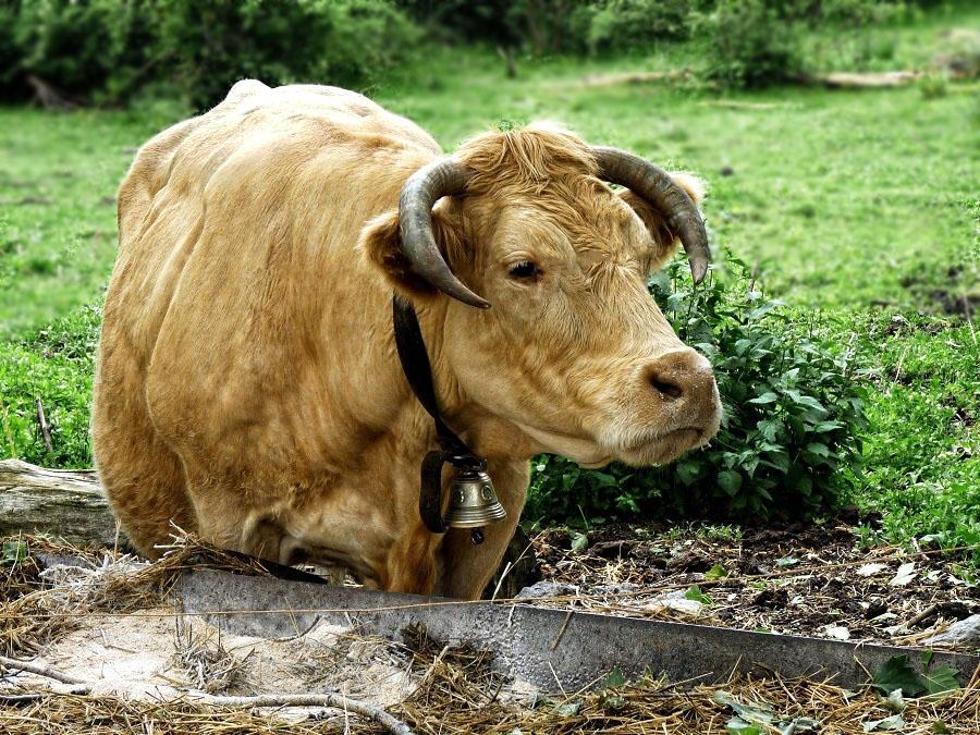 Ho la vache !! 1210