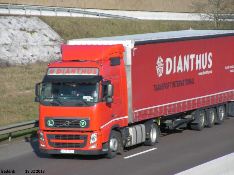 Dianthus Pict0216