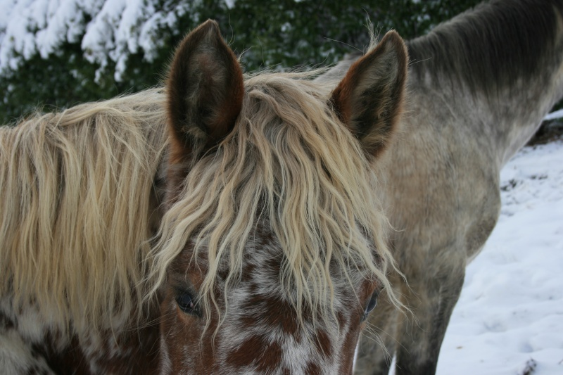 CONCOURS PHOTOS, L'oeil des chevaux ! Img_3610