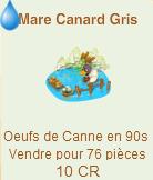 Mare colvert et Mare canard gris =>  Oeuf de Canne Canard12