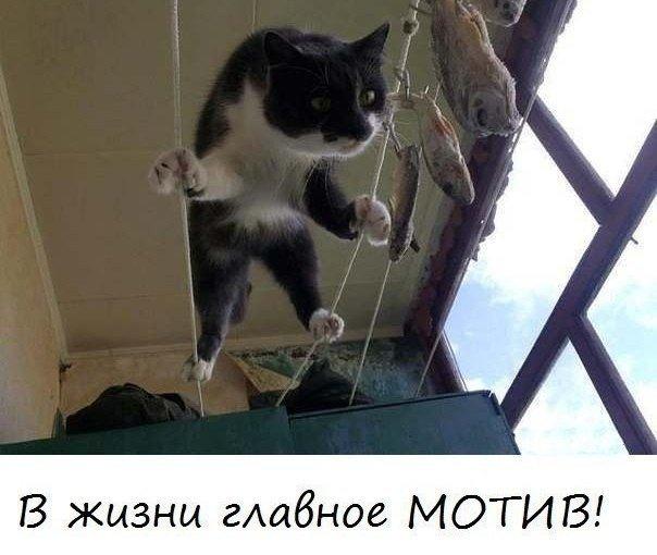 Позитив ))))Демотиваторы, анекдоты и прочее))) - Страница 3 Zsjwl810