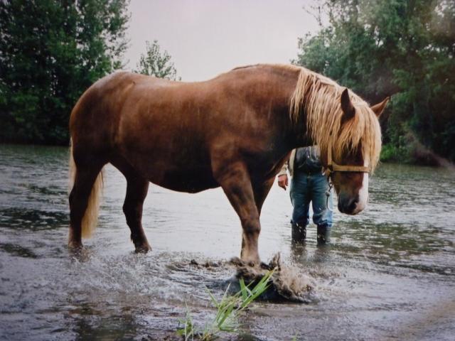 Concours Photos d'Août et Septembre 2013 : Le Cheval et ses Jeux d'eau Photo_10