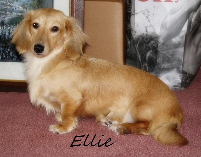 Ellie Ellie_10