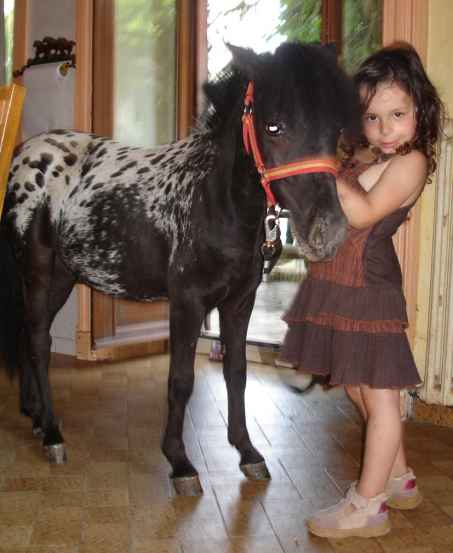 PONEY FALABELLA Poney_12