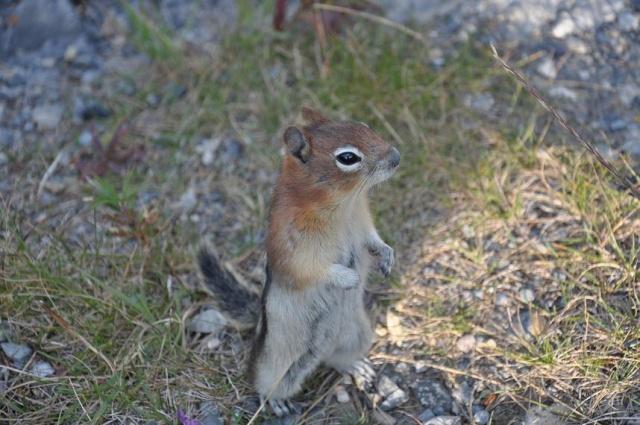Belles photos d'animaux c'est ici !  Dsc_0718