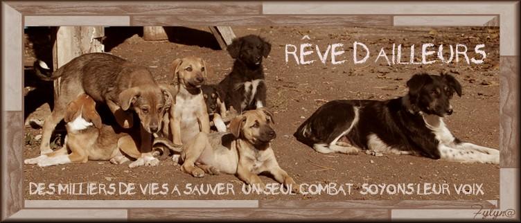 REVE D'AILLEURS
