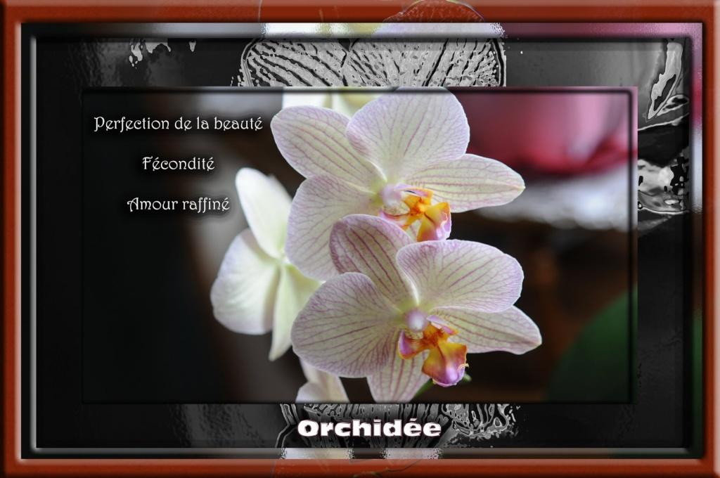 Les Fleurs - Page 2 Orchid10