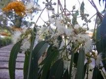 Fleurs du bout du monde- floraisons exotiques Austra38