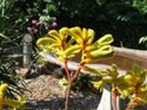 Fleurs du bout du monde- floraisons exotiques Austra40