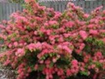 Fleurs du bout du monde- floraisons exotiques Austra43